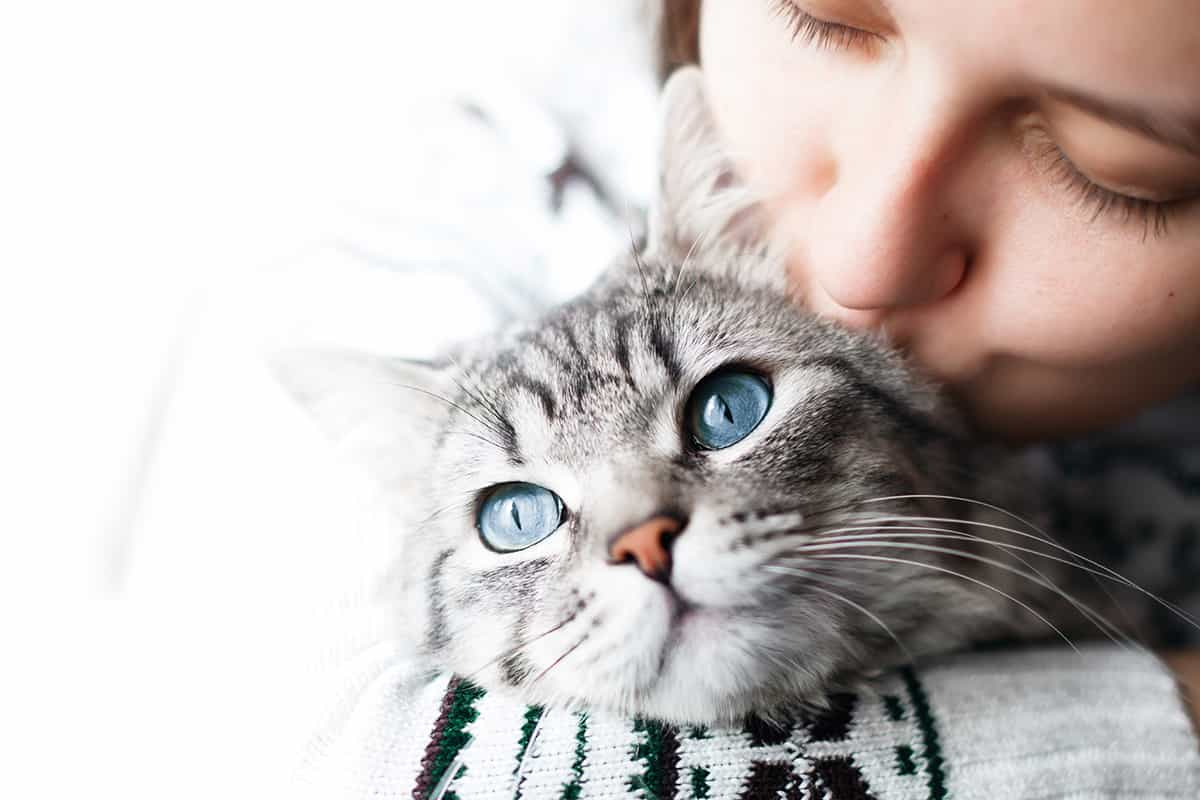 Les Questions A Se Poser Avant D Adopter Un Chat Societe Protectrice Des Animaux De L Estrie Spa Refuge Adoption