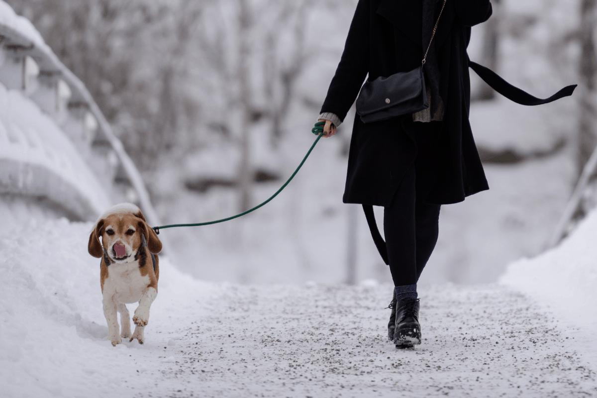 Marche hivernale avec pitou