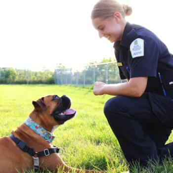 SPA Estrie - La Société protectrice des animaux de l'Estrie - Organisme de charité soucieux du bien-être des animaux