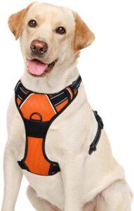 chien avec harnais